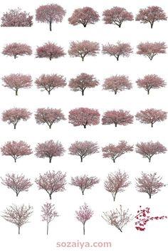 河津桜の切り抜き素材。建築プレゼンやデザインで役に立ちます。