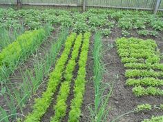 Vegetable Garden, Vineyard, Vegetables, Plants, Outdoor, Gardening, Houses, Tips, Vegetable Gardening
