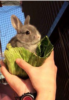 Snuggled in a cabbage leaf :)
