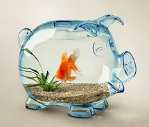 54 003 Large Fish Fish Bowl Funny Pig Liked 53 Times 3 Comments On Apr