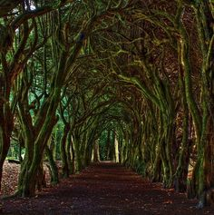 Dublin, Ireland Dark Hedges, County Antrim. This beautiful avenue of beech trees was planted by the Stuart family in the eighteenth century, and is one of the most photographed natural phenomena in Northern Ireland.