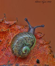Snail <3