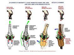 http://www.anatomyinmotion.com/?id=4947_9566_6942_4289