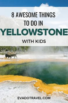 A list of fun things to do with kids in Yellowstone National Park. Tips for how to enjoy your family vacation hiking, taking a picnic, and looking for animals like bison. Visit Yellowstone, Yellowstone Vacation, Yellowstone Park, Alaska Travel, Travel Usa, Alaska Cruise, Waterfalls Near Nashville, Hiking Spots, Tennessee Vacation