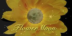 Full Moon for May (10th) 2017 ~ The Flower Moon. When is the next Full Moon? Moon phases, best days, and more from The Old Farmers Almanac