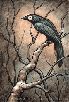 Signed and matted print of original Black Bird IV watercolour painting by Eden Bachelder, ready to frame. Raven, crow, corvid.. $20.00, via Etsy.