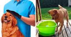 25 Of The Weirdest But Most Practical Products That Every Dog Owner Will Appreciate Dog Birthday Gift, Dog Owners, Dog Stuff, Weird, Holidays, Pets, Animals, Products, Animaux