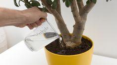 Bei manchen Pflanzen kann man das Gießen auch ruhig einmal vergessen. (Quelle: Thinkstock by Getty-Images)