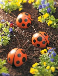 Someday one of these bowling ball lady bugs might mysteriously appear in Emily's garden. I, of course, will be utterly flabbergasted by its arrival.