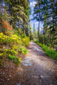 Fall Colors on a Mountain Trail, Glacier National Park, Montana