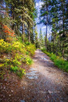 Fall Colors on a Mountain Trail, Glacier National Park, Montana