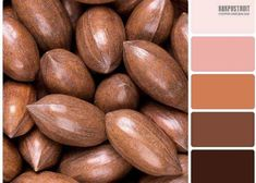 Color Combinations, Color Schemes, Pantone, Color Splash, Lightroom, Peach, Inspiration, Change, Interior