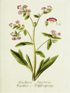 lavender-botanical_1.jpg (1148×1530)