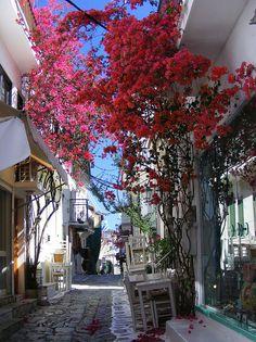 Alley in the town of Skiathos island, Sporades, west Aegean sea, Greece Beautiful Islands, Beautiful Places, Places To Travel, Places To See, Travel Around The World, Around The Worlds, Skiathos Island, Empire Ottoman, Greece Islands