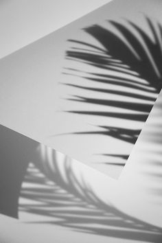 Ana Domínguez Folded Shadows for The Plant Journal