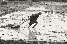 農人 張良一 攝影 60x85x2cm