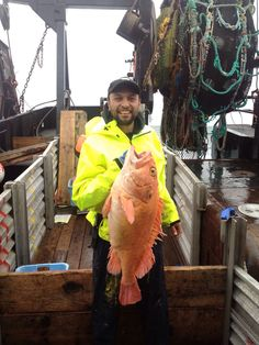 Yellow Eye... Alaska Fishing, Yellow Eyes, Rock, Outdoor, Outdoors, Stone, Rock Music, The Rock, Outdoor Games