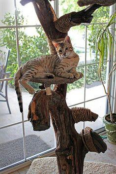 Cat Tree ~ DYI Juniper Tree
