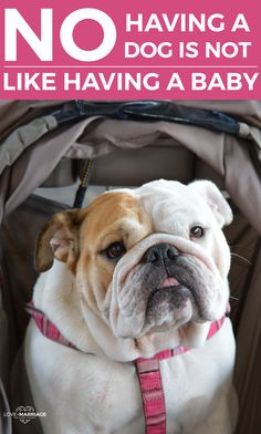 No, Having A Dog Is Not Like Having A Baby