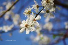 Frühlingsblüher # weiße Blüten # Farbenreich