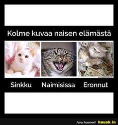 Top 100 - Viikko - HAUSK.in Humor, Random, Memes, Cats, Cheer, Gatos, Kitty Cats, Meme, Jokes