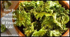 How to Harvest, Preserve, & Freeze Kale   www.healyourselfdiy.com #paleo #glutenfree #vegan #vegetarian