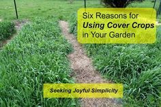 Every garden can benefit from cover crops, even if you have limited space. Planning now, you can grow fall and winter cover crops and enjoy healthier soil and plants for next season.