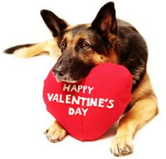 Dog valentine's day