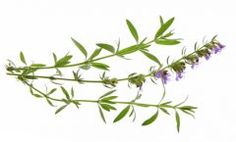 Βιολογικό πολλαπλασιαστικό υλικό αρωματικών και φαρμακευτικών φυτών Archives - βιοΠοιότητα
