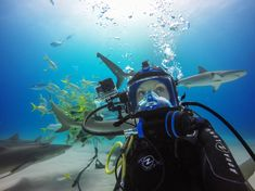 GoPro + Periscope is changing the game of live streaming. Check out our Periscope from the Bahamas with Hammerhead Sharks!