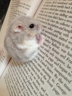 This mouse who can clearly read ...!!!... was sent to me as a gift from Brittany Greenholtz. Thank you SO much for this uber sweetness!