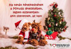 Ha netán kételkednétek a Mikulás létezésében, legyen eszetekben: akit szeretnek, az van! Akita, Teddy Bear, Christmas Ornaments, Holiday Decor, Animals, Animales, Animaux, Christmas Jewelry, Teddy Bears