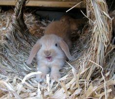Zwergwidder Kaninchen NHD - Startseite