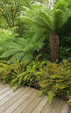 Tree ferns and ferns create essential Tropical look, and they thrive in some sha. Tropical Garden Design, Tropical Landscaping, Backyard Landscaping, Landscaping Ideas, Back Gardens, Small Gardens, Outdoor Gardens, Garden Ideas Uk, Garden Inspiration