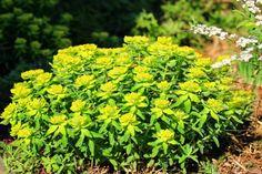 kesäkukkia, keltaiset kukat