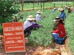 Agricultura familiar periurbana y de traspatio contribuye a la seguridad alimentaria de las familias en condiciones de pobreza alimentaria. SAGARPA SAGARPAMX #SomosProductores