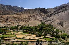 India, Ladakh. Terraced fields of Dha-Hanu valley.  #Leh #Ladakh #India #Travel #photography