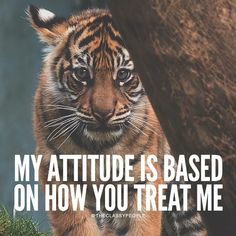 The Classy People Tiger Quotes, Lion Quotes, Animal Quotes, Inspirational Quotes About Success, Work Motivational Quotes, Meaningful Quotes, Funny Attitude Quotes, Badass Quotes, Wisdom Quotes