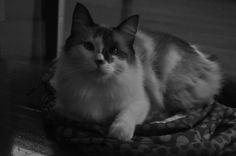 Mia (Foto de Alessandra Padovez)