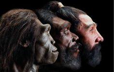 Descobertas científicas que comprovam a Teoria da Evolução #1