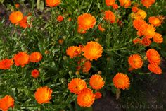 Preserves, Spices, Herbs, Flowers, Plants, Gardening, Herbal Medicine, Per Diem, Mother Nature