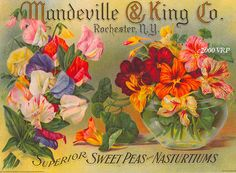 Most likely done by victorian artist Paul de Longpre who did work for Brupee Seeds.