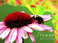 Beelicious Coneflower by Margaret Newcomb