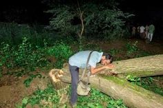 Aarey Colony Row Live Updates: Supreme Court puts stay on tree-cutting