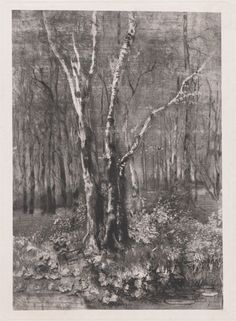Mosè Bianchi, Woods in the Park near Monza, 1895, etching and aquatint, Purchased as the Gift of Matthew and Ann Nimetz
