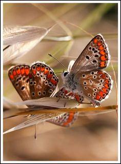 Mariposas,super lindas