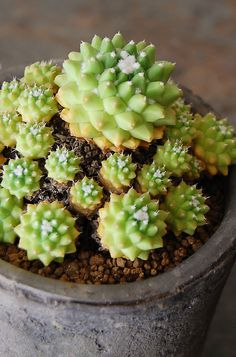 Hens & chicks?? Too cute