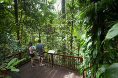 Tourists look out over rainforest surrounds at Daintree Rainforest Discovery Centre. Daintree National Park, Queensland, Australia - Andrew Watson Photography