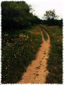 Bike Trails Beauty
