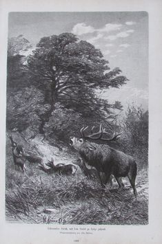 1882 Chr. Kröner: Schreiender Hirsch mit dem Rudel - 27x41 Kunstblatt Moose Art, Animals, Ebay, Art Prints, Wild Animals, Animais, Animales, Animaux, Animal